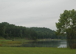 Lush green trees and green meadow on the lakeshore of Yatesville Lake State Park, Louisa, Lawrence County, Kentucky.